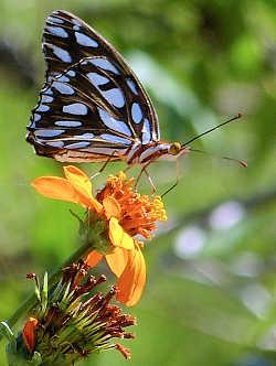Specialty Gardens SPECIALTY GARDENS Butterfly Garden