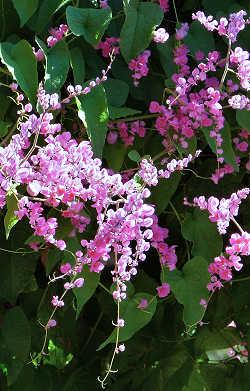 Hummingbird Flowers Garden